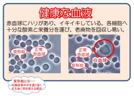 【健康チェック】生体血液チェック